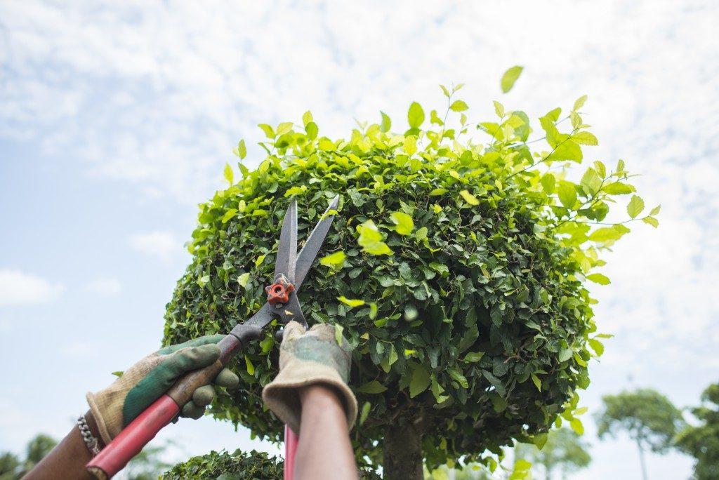 trimming plants
