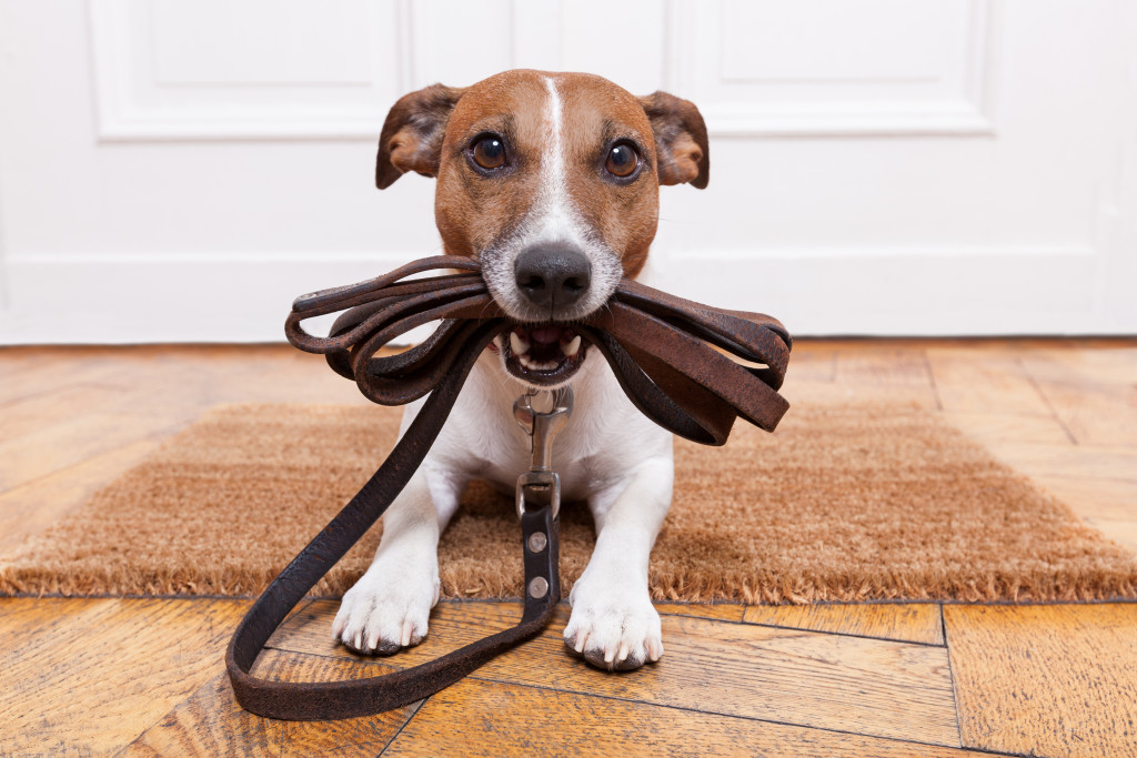 dog holding its leash